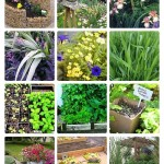 garden inspiration, flowers, shrubs, annuals. perennials, gardening tips, spring gardening