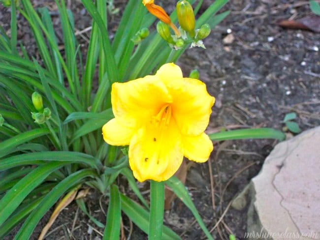 Lessons from the Garden / Bloom Where You're Planted / www.mrshinesclass.com