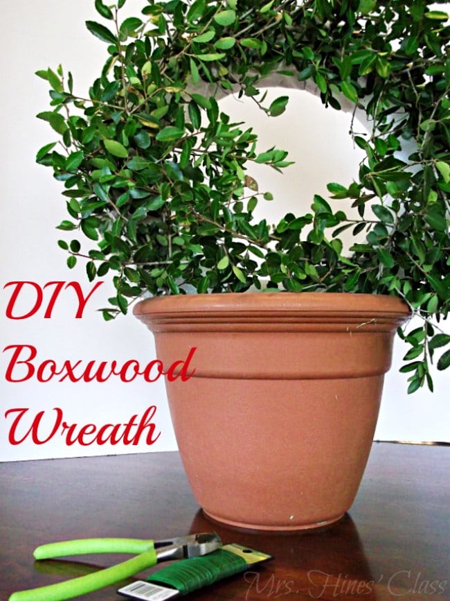 Get the Designer Look for Less by Making Your Own Boxwood Wreath.  Get the tutorial at Mrs. Hines' Class